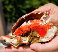 醇鲜 熟冻英国面包蟹共1600-2000g2只装