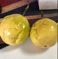 迟到10天的百香果 换来的却是无尽的温暖 献给可爱的买手们
