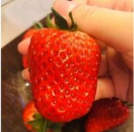 个大味甜!瑞利安 巧克力草莓 750gx2件 共3斤