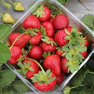 冬季草莓 四川 西昌 红颜草莓3斤装