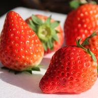 菲农 无锡 红颜奶油草莓 3斤装