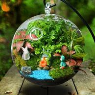 创意DIY 自然动力 微景观 生态瓶摆件