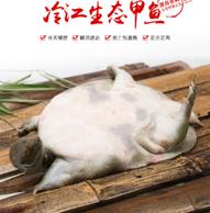 Plus会员:冷江 鲜活生态余姚甲鱼 三年以上母鳖 850g*4只