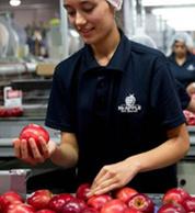 约140g/个,8个装,MrAPPLE 新西兰红玫瑰 Queen 苹果