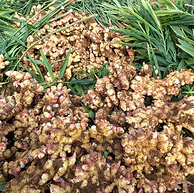 贵州盘县农家自种小黄姜 现挖新姜 3斤