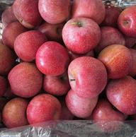 买一送一?北纬35°高原苹果共8斤