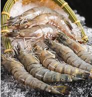 长12-15cm、3斤,爱吃鱼 厄瓜多尔白虾