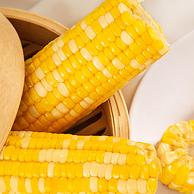 非转基因 330gx10根:米小西 山西甜水果玉米