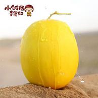 小饭团李简如 甘肃 民勤黄金蜜瓜10斤