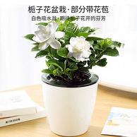 自動吸水,Hodo 紅豆 梔子花 盆栽