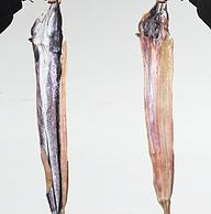无添加、原汁原味:鲜煌 特大鳗鱼干整条 1000g真空装