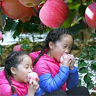 京觅 烟台红富士苹果 一级铂金大果 单果230g以上 5KGX2件 +凑单品