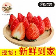 Plus会员:东方态美 丹东99草莓 净含量3斤