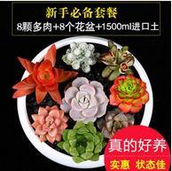 明萱 多肉植物组合:3包土+8个插牌+8个多肉+8个花盆 拍下15.8元包邮
