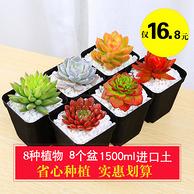 8盆多肉植物+8个花盆+进口1500ml土 15.8元包邮或者99金币兑换 15.8元包邮或者99金币兑换