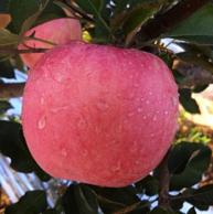 宽宽果园 烟台栖霞红富士苹果 5斤