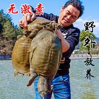 千岛湖 4年生态甲鱼活体1.5斤