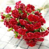 情定花开 母亲节鲜花速递 18枝多头康乃馨