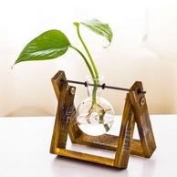 雨花同行 创意水培绿萝花卉盆栽 吸甲醛防辐射