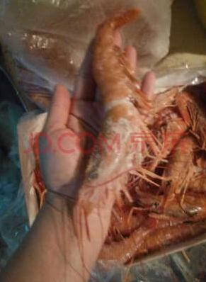 年货:限地区 海买 原装进口冷冻阿根廷红虾L2 2kg(约40~50只)*2件 186元包邮 买手党-买手聚集的地方